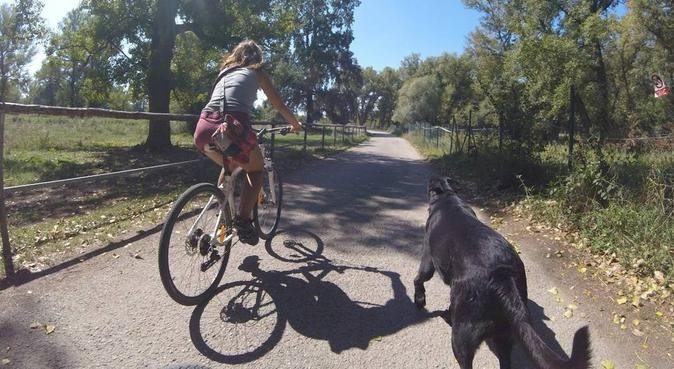 Basically a dog fitness studio with wellness care, hundepassere i Halden