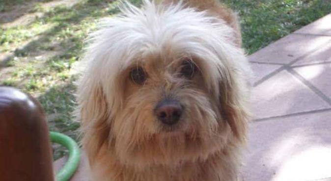 PASSEGGIATE E TANTO AMORE PER I VOSTRI AMICI A 4 Z, dog sitter a Rimini