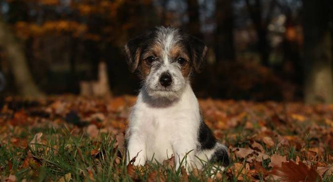 """Vos """"toutous"""" en promenade!, dog sitter à Poitiers"""