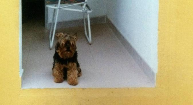Gentile,Tranquillo e Simpatico., dog sitter a Modena