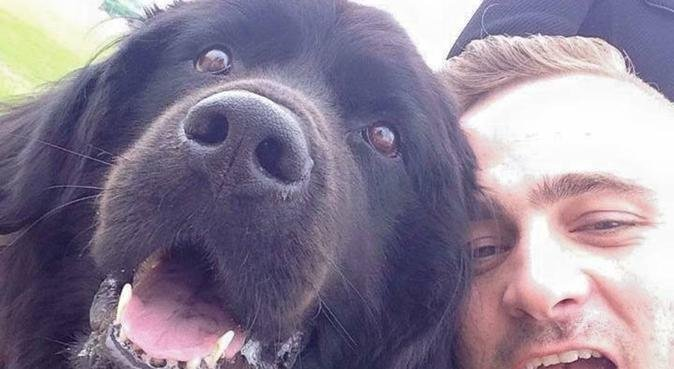 Doggy wags and walks with conall, dog sitter in Belfast
