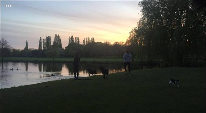 Dog walker in Birmingham, dog sitter in Birmingham