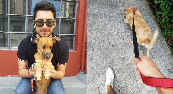 🐾 Un hogar con mucho amor para su perro 🐶❤🐾, canguro en Valencia