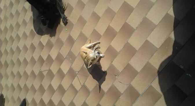 coccole affetto e passeggiate, dog sitter a Roma