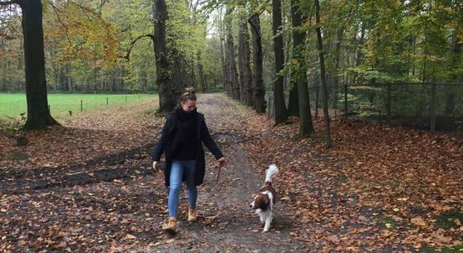 Groot hart voor honden, hondenoppas in Amersfoort, Nederland