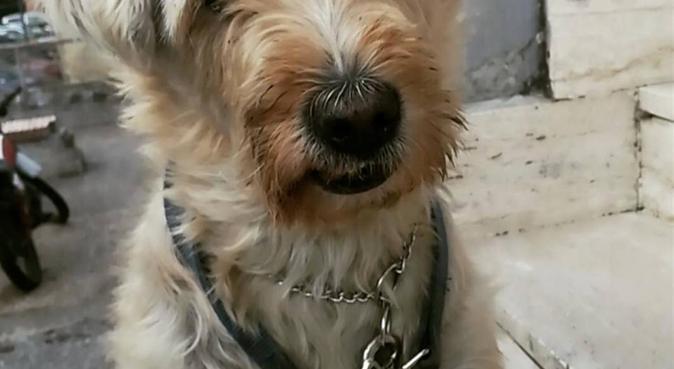 Passeggiate con Ninni❤️, dog sitter a Napoli