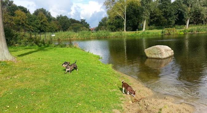 Liefdevolle opvang voor uw hond, hondenoppas in Alkmaar