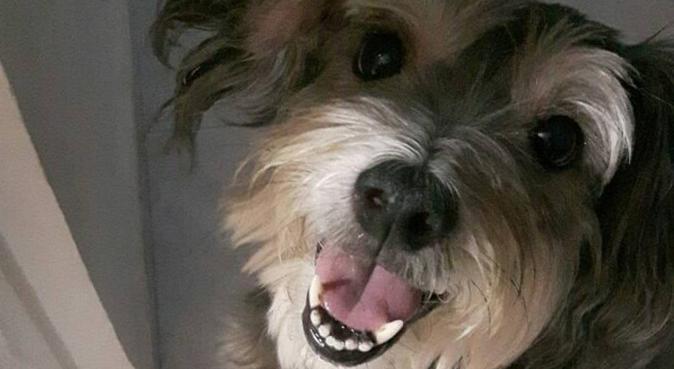 La meilleur ami des chiens- Responsable et fiable, dog sitter à Cergy