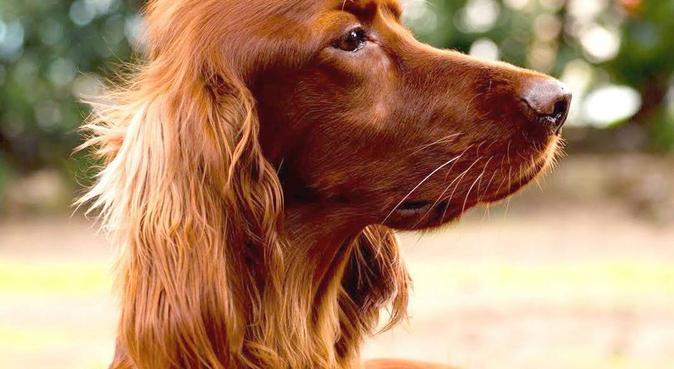 """""""A spasso con StiTch"""", dog sitter a Roma"""