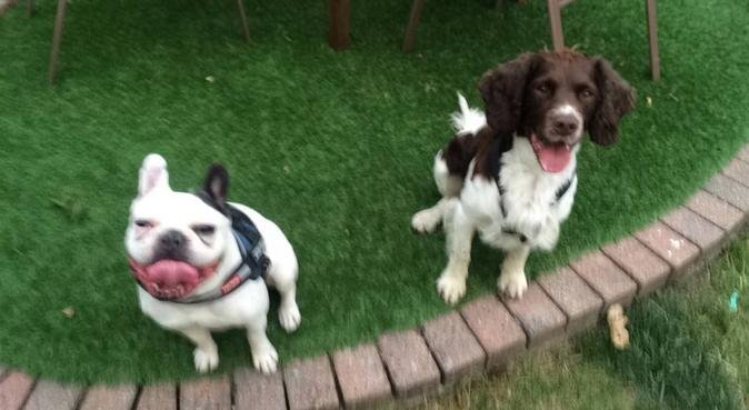 Dog's best friend! Vet worker, dog walker., dog sitter in Ilford