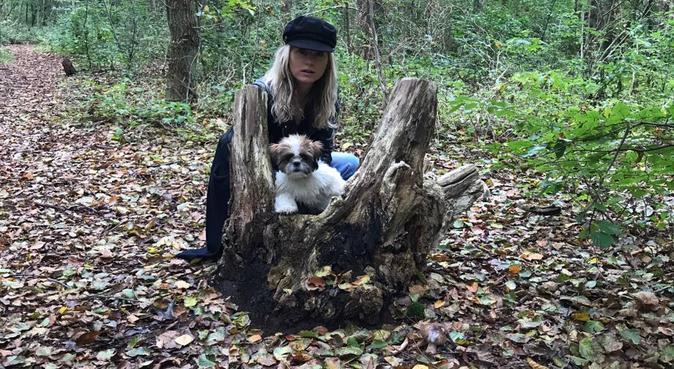 Liefdevolle Shi Tzu en baas zoeken wandelmaatje, hondenoppas in Haarlem