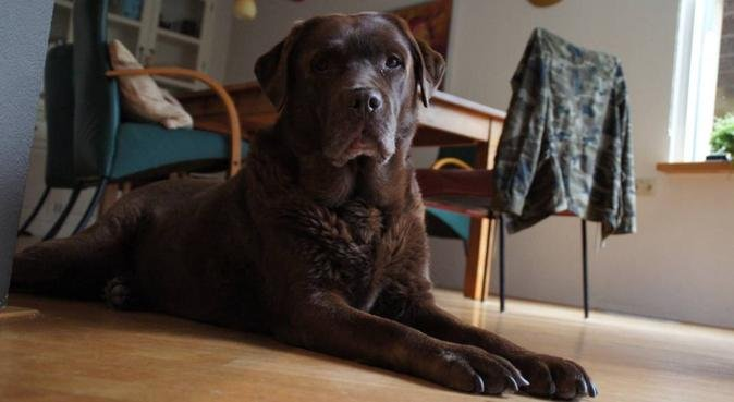 Wandelingen in natuur en park met hondenliefhebber, hondenoppas in Utrecht