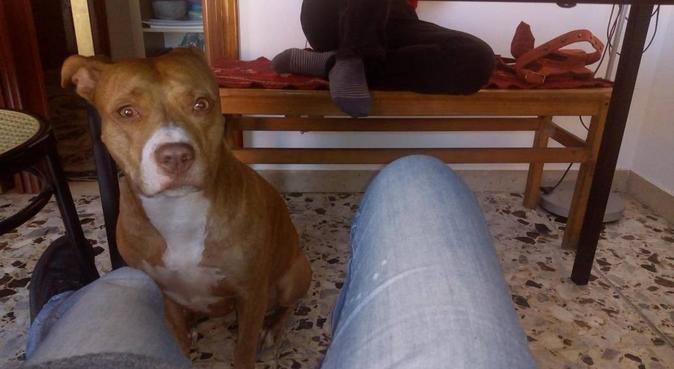 Passeggiatone e divertimento per loro e per me, dog sitter a Napoli
