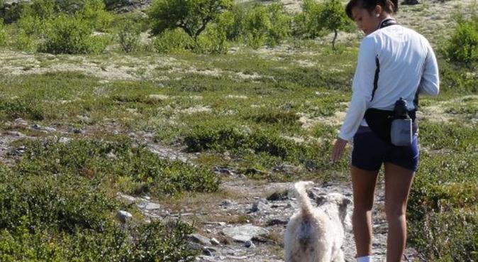 Hundens beste venn!, hundepassere i Kristiansand