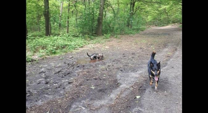 Oppas Bergharen, hondenoppas in Bergharen