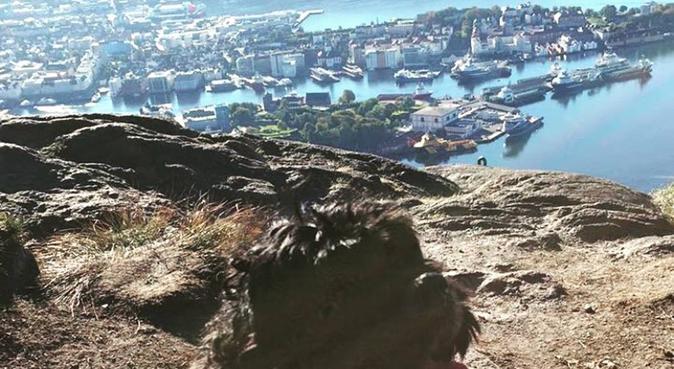 Turglade jente med stor kjærlighet for de firbeint, hundepassere i Knarrevik, Norge