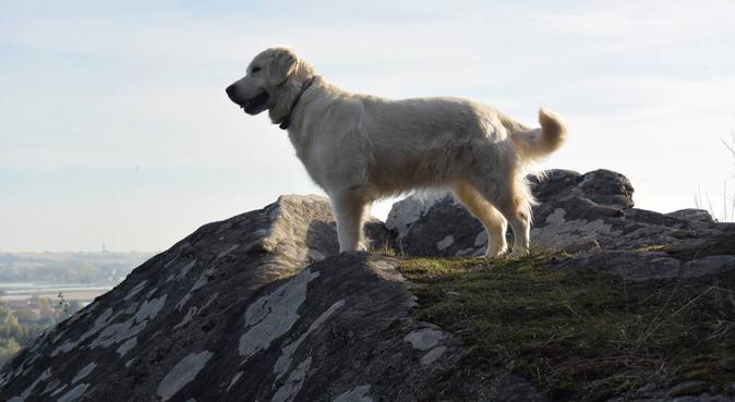 Des vacances à la campagne pour votre Toutou !, dog sitter à Le Cellier