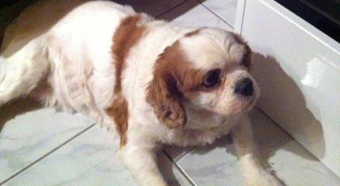Garde Toutou, dog sitter à Nantes