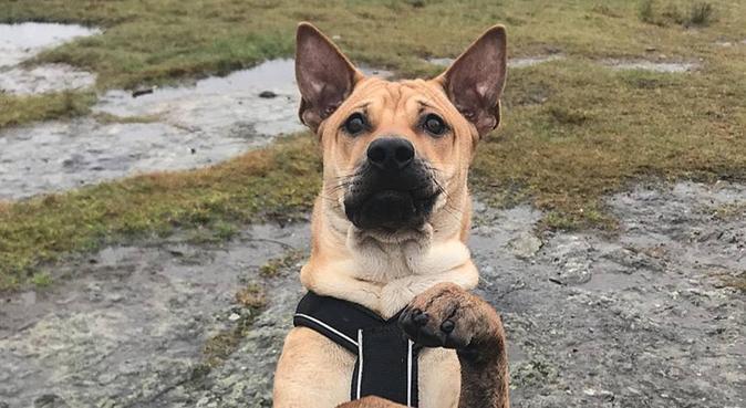 Ut på tur, aldri sur!, hundepassere i Hafrsfjord