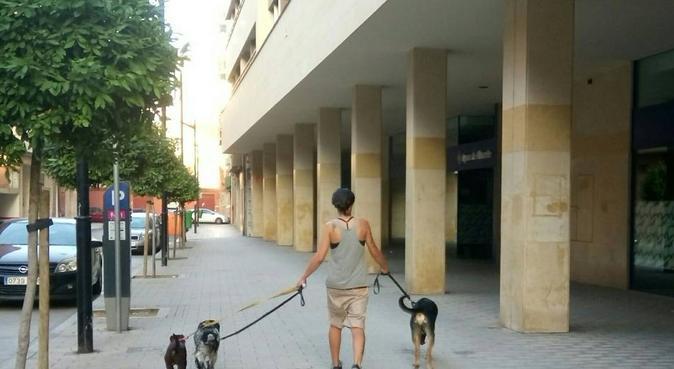 Paseadora de perros con experiencia., canguro en Albacete