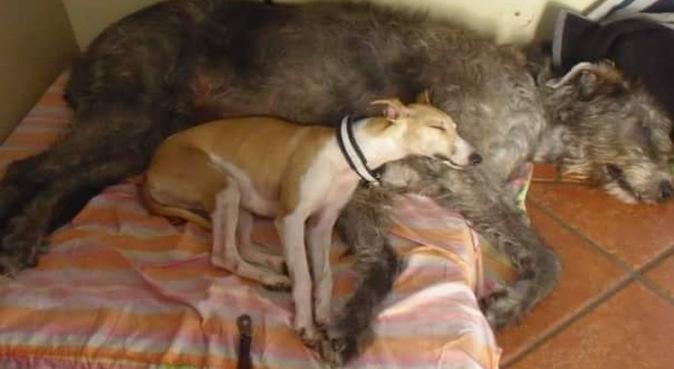 Friluftsglad hundeelsker søker turkamerat!, hundepassere i Hakadal