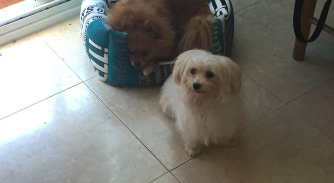 Tu perrito como en casa , os estamos esperando, dog sitter à San Sebastián
