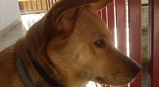 Pet sitter in periferia, dog sitter a Palermo