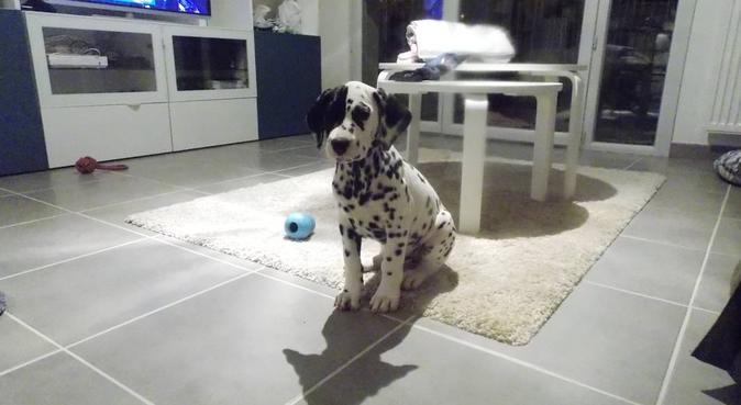 Gardes et promenades par étudiante vétérinaire, dog sitter à Colomiers