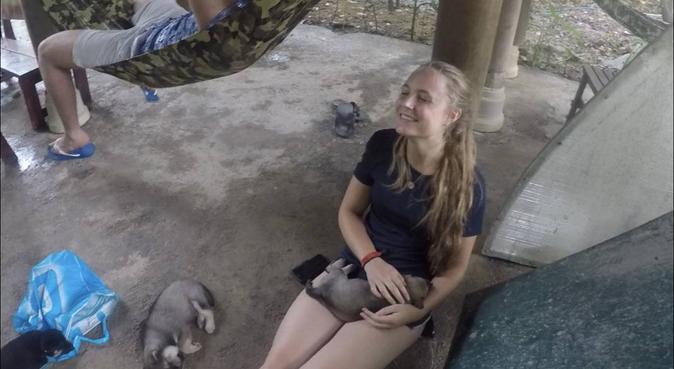 Dog lover looking for dogs to love, hondenoppas in Diemen, Netherlands