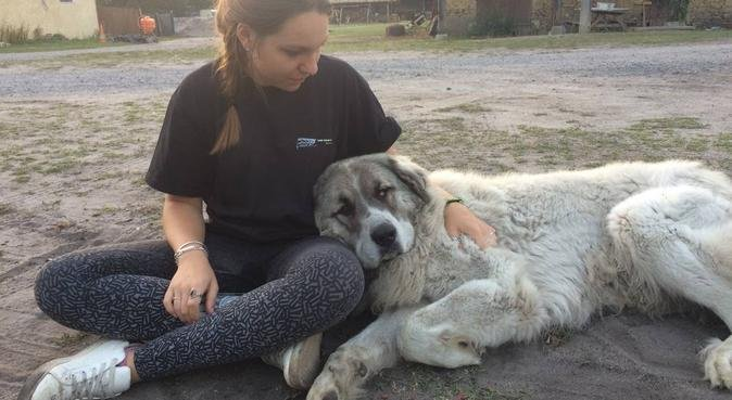 Doggy dog, dog sitter à Pujaut