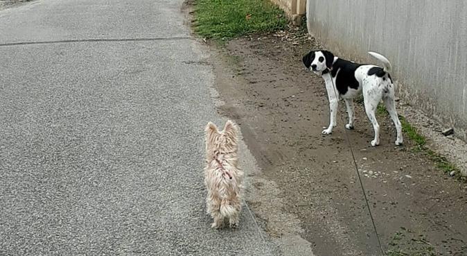 Les amoureux des animaux, dog sitter à Lyon