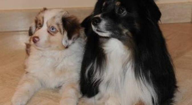 les chiens au petit soin, dog sitter à Chennevières-sur-Marne, France