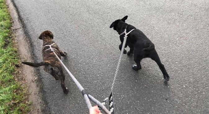 Garde de chiens sur Rennes, dog sitter à Rennes, France