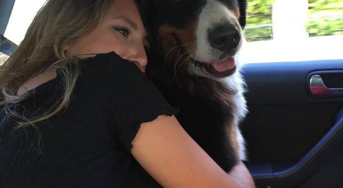 Dog lover looking for dog walks, dog sitter in Bath