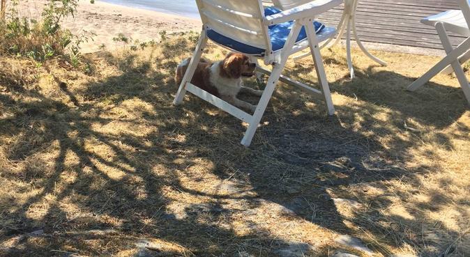 Hundpassning i stan och på landet, hundvakt nära Bagarmossen