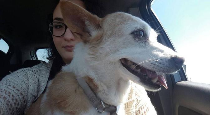 La migliore amica dei vostri cani!, dog sitter a Napoli