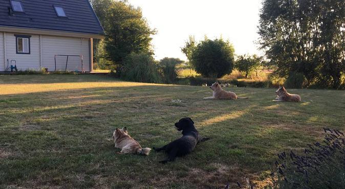 Studente met liefde voor honden en grote tuin :), hondenoppas in Amsterdam