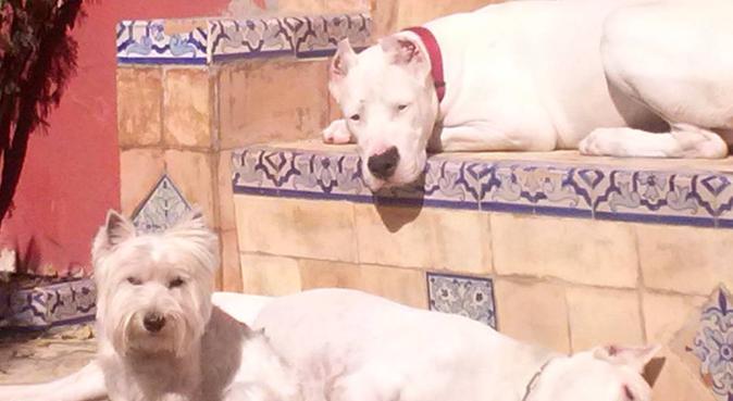 Perros en Familia, canguro en San Juan de Aznalfarache, España