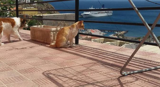 ¡Paseos divertidos para mascotas!, canguro en San Cristóbal de La Laguna