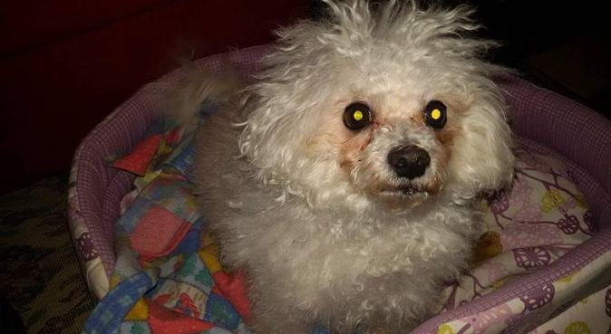 Amore per gli animali., dog sitter a Padova
