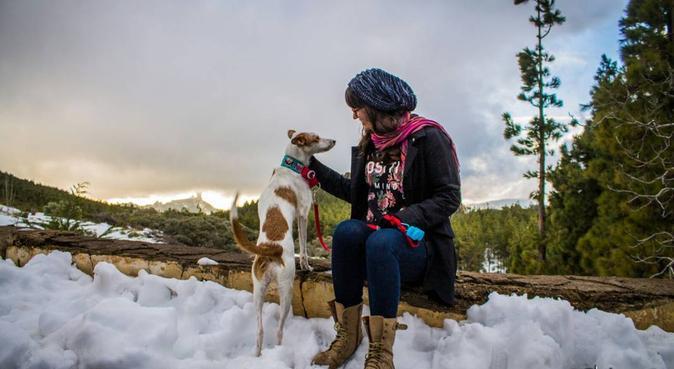 Paseo a tu compañero, dog sitter in Las Palmas de Gran Canaria
