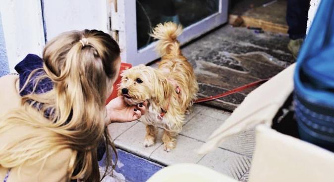 Får jag passa din hund? 😍, hundvakt nära Gothenburg