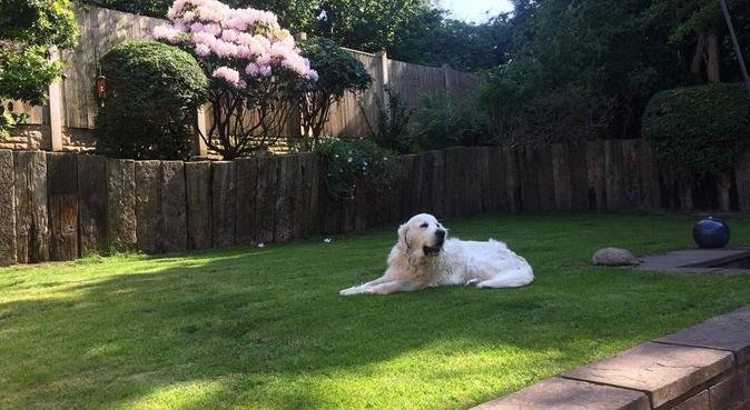 A happy holiday home for your dog, dog sitter in Chester CH2 3FA