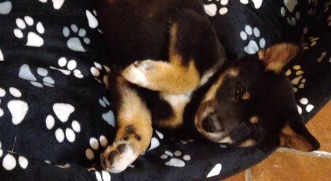 L'ami préféré de votre Animal préféré, dog sitter à Marseille