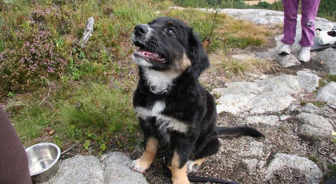 flotte turer, mye kos, hundepassere i Ræge, Norge