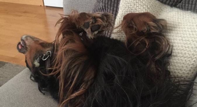 Aktivt par i egen leilighet-tilgjengelig på dagtid, hundepassere i TRONDHEIM