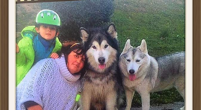 Amante de perros y gatos..., canguro en Madrid