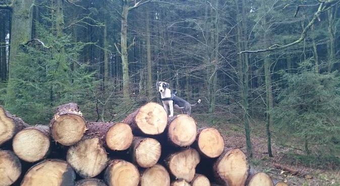 Amy Ferrer Faulers BigGangTheory, Hundesitter in Altenbeken