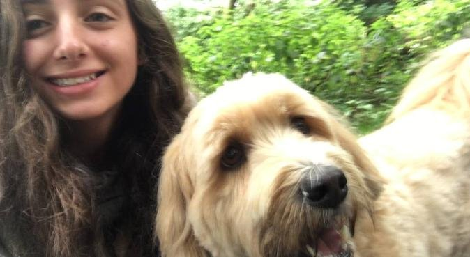 Dog walking in the park, dog sitter in Liverpool, UK