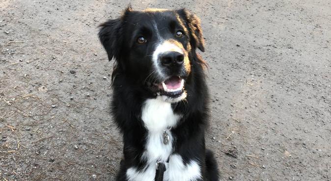 Kärleksfull hundpassare och promenerare i Nacka, hundvakt nära Nacka